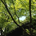 【動画】美しいうぐいすの鳴き声 ~福珠窯周辺の自然~